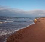 beachcomb PEI