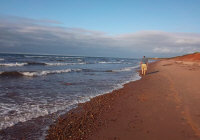 beachcombing PEI