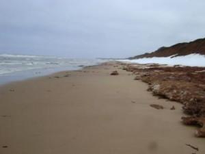 PEI_Beachcombing